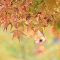 今年の紅葉(ほしだ園地)