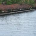 Photos: 大川で