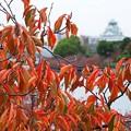 大阪城の見える風景