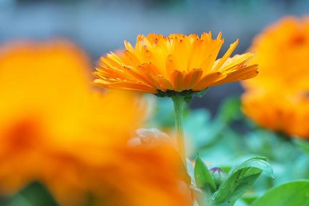 Photos: オレンジ色の花