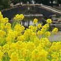 Photos: 初春の公園