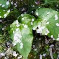 Photos: 花散らしの雨