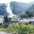 Photos: 春の川岸