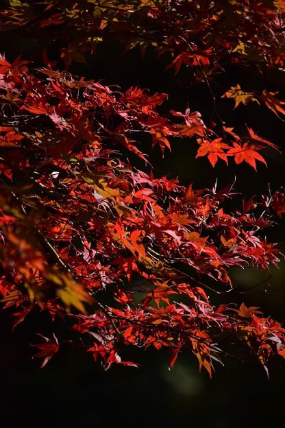 晩秋にゆれて