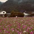 Photos: 三田コスモス