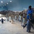 20160312 長崎ペンギン水族館18