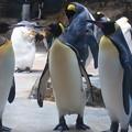 20160312 長崎ペンギン水族館20