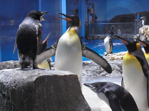 20180620 長崎ペンギン水族館 ジュン01