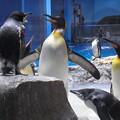写真: 20180620 長崎ペンギン水族館 ジュン01