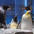 Photos: 20180620 長崎ペンギン水族館 ジュン02