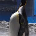 20180620 長崎ペンギン水族館 ジュン07