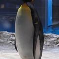 20180620 長崎ペンギン水族館 ジュン08