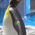 20180620 長崎ペンギン水族館 ジュン11