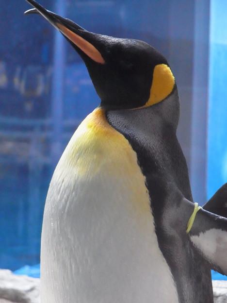 20180620 長崎ペンギン水族館 ジュン13