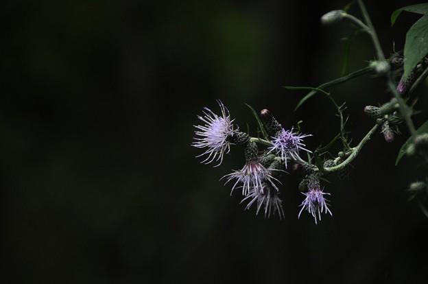 Photos: 大好きな花