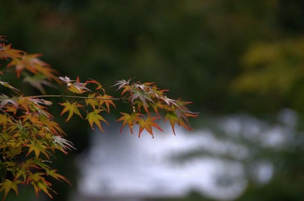 秋めいてきました