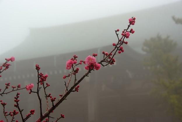 摩耶山天上寺の梅