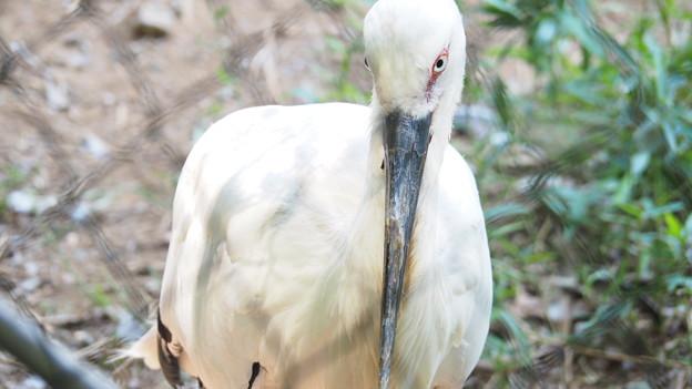 多摩動物公園 170