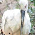 Photos: 多摩動物公園 170