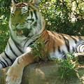 写真: 多摩動物公園 357