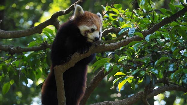 Photos: 多摩動物公園 566