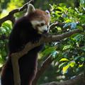 写真: 多摩動物公園 566