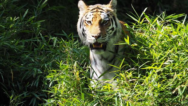 多摩動物公園 732