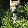 写真: 多摩動物公園 732