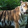 写真: 多摩動物公園 744