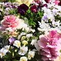 写真: 花壇