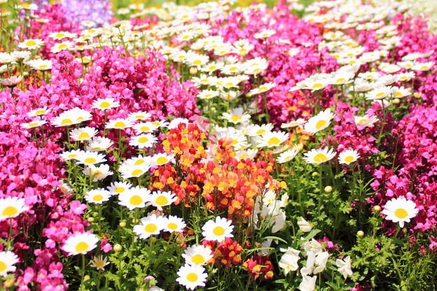 艶やかな花壇