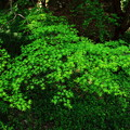 写真: グリーングリーン