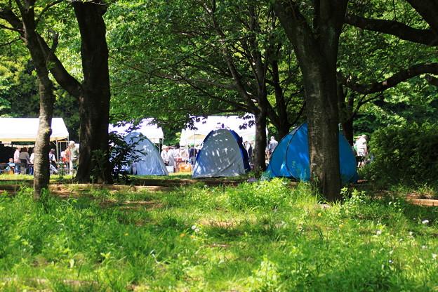 公園の中のテント