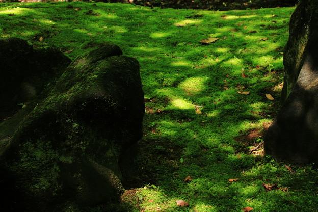 苔に光の粒