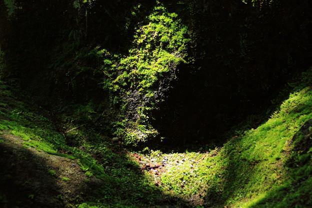 岩苔と日光