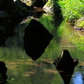 写真: 池