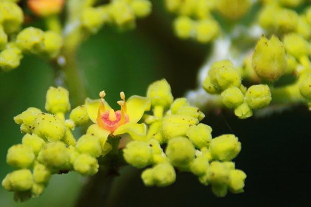 小さな花?