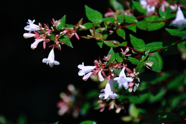 鮮やかな緑と白い花