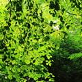 グリーンの輝き