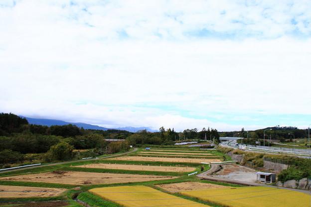 写真: 稲穂と高速道路