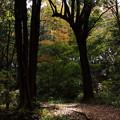 散歩道の秋
