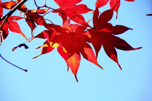 青空と紅葉