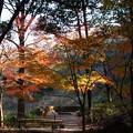 過行く秋を惜しむ