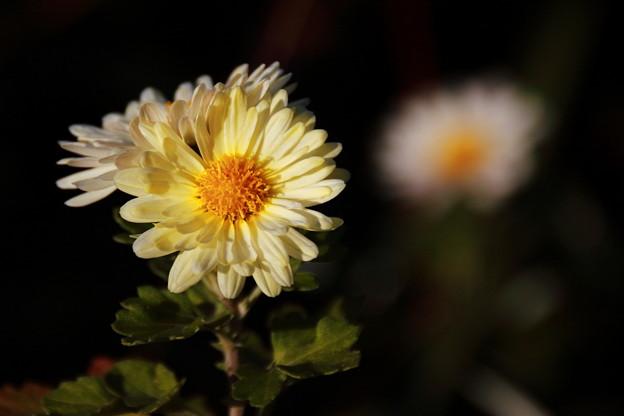道端の花壇で 黄