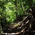 Photos: 小さな石碑と木漏れ日の散策道