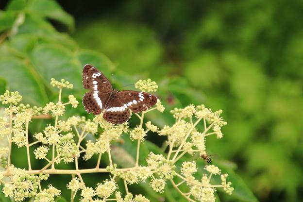 蝶と蜂のコラボ
