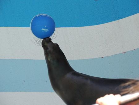 ボールも上手に。