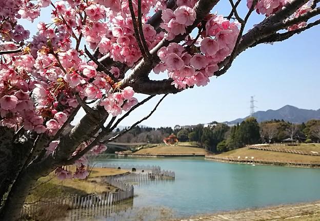 亀山サンシャインパーク。