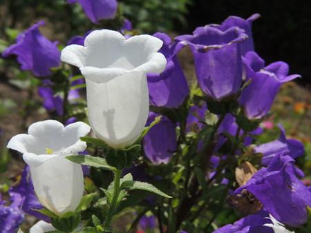 白と紫色もありました。