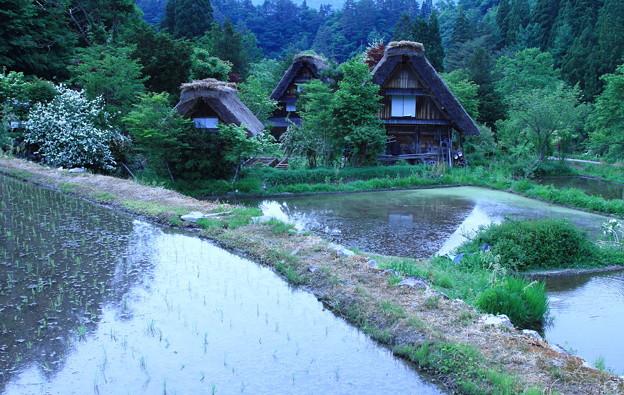 飛騨白川そして初夏